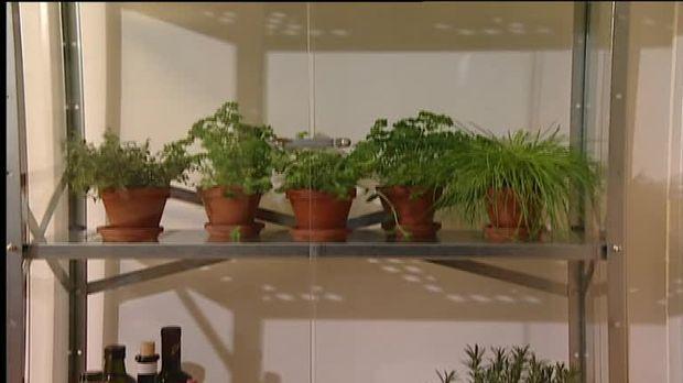 Kräuter Anbauen In Der Wohnung Tipps Und Tricks Sat1 Ratgeber