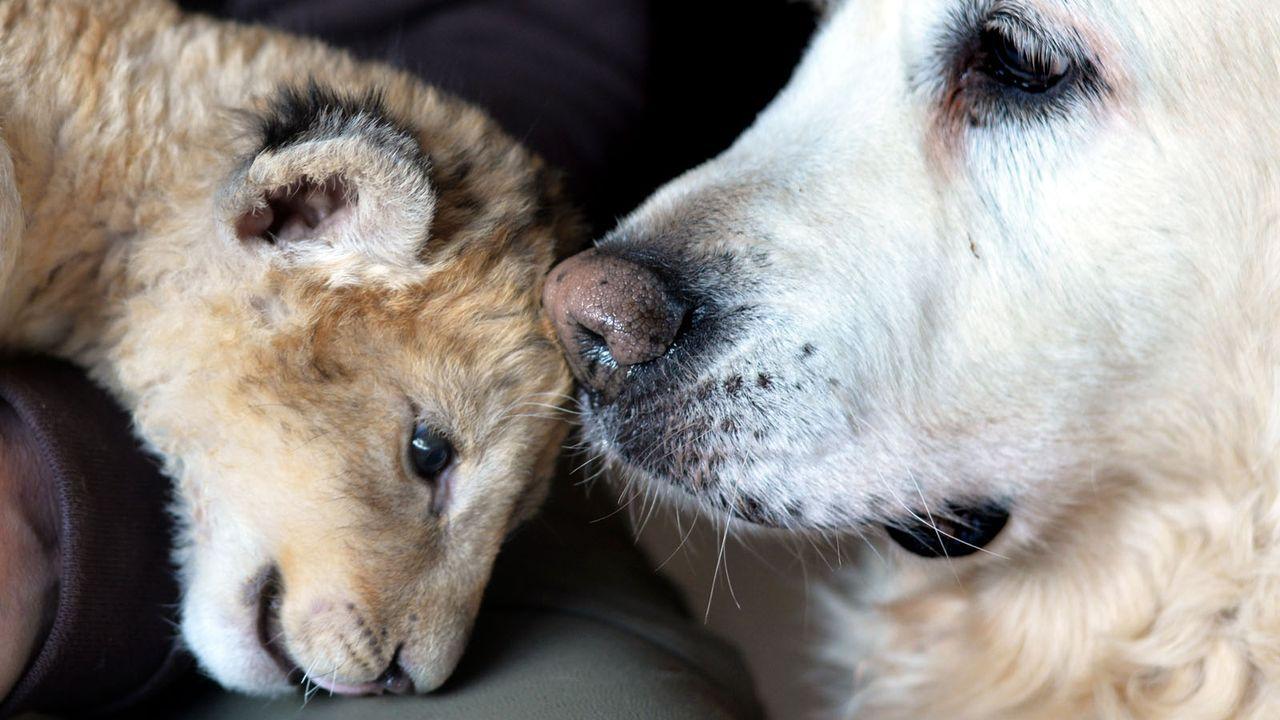 Löwenbaby2 - Bildquelle: dpa