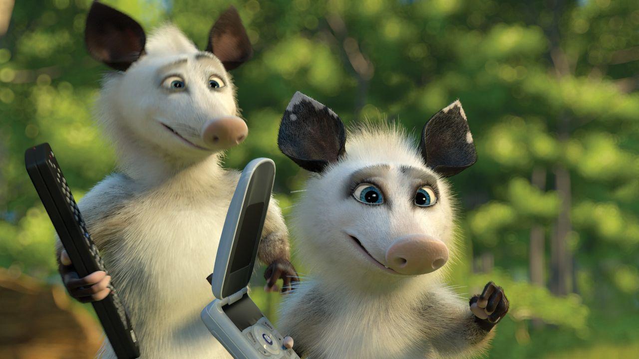 Auch die Opossums Ozzie (l.) und Heather (r.) erfreuen sich schnell an den technischen Errungenschaften der Menschheit ... - Bildquelle: United International Pictures