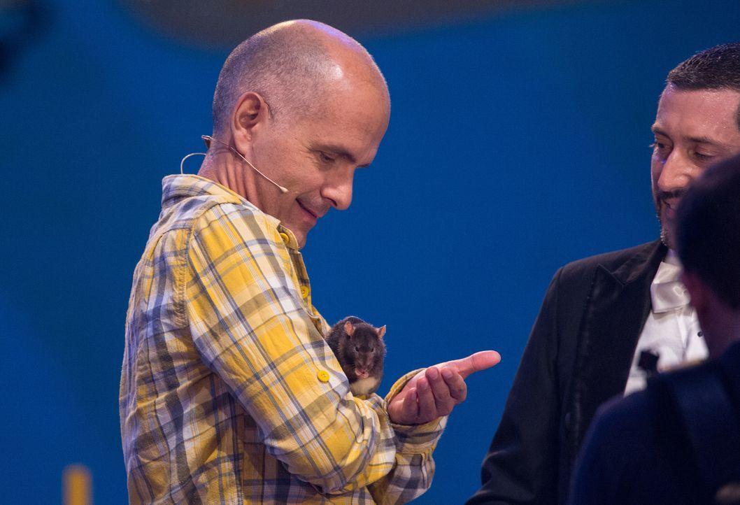 Süß, die Ratte - sieht Christoph Maria Herbst das auch so? Beeindruckt von ihrem Talent ist er allemal. Kann sich die Ratte mit ihrem Kunststück ins... - Bildquelle: Jens Hartmann SAT.1