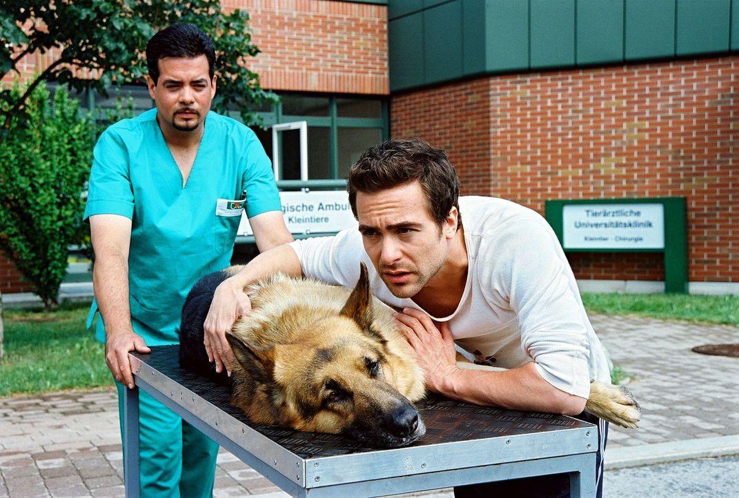 Marc (Alexander Pschill, r.) bringt den angeschossenen Rex ins Krankenhaus. Der Hund wird augenblicklich in den OP gebracht ... - Bildquelle: Sat.1