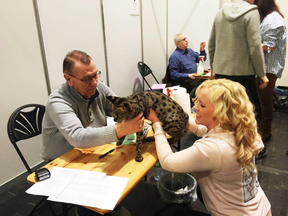 15 Dinge, die Sie über Katzen wissen müssen. Rund 13 Millionen Katzen leben in deutschen Haushalten. Doch nicht alle Katzenbesitzer deuten das Verha... - Bildquelle: SAT.1