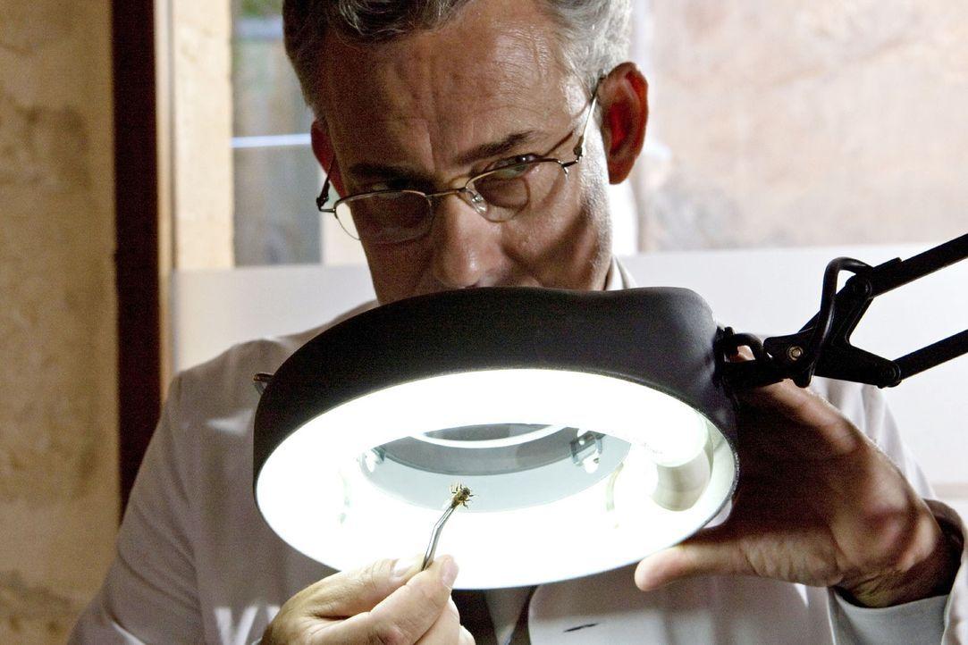 Karla sucht Hilfe im Entomologischen Institut. Kann Dr. Alvarez (Rolf Kanies) Auskunft über die Biene geben? - Bildquelle: Sat.1