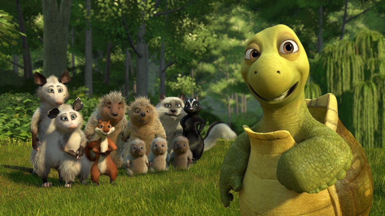 """Verne (r.) ist der Anführer der Tiergemeinde. Seine """"Familie"""" zu beschützen ist sein oberstes Ziel ... - Bildquelle: United International Pictures"""