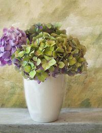 Nicht nur auf Hochzeiten sehr beliebt: Ein Blumenstrauß aus Hortensien bringt...