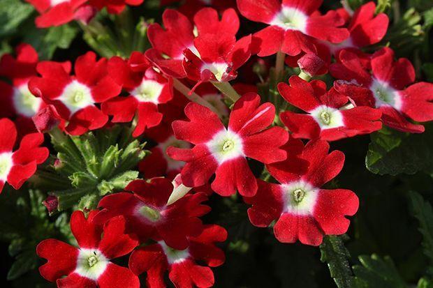 160513_Sommerpflanze_Bildergalerie_b5_Pixabay - Bildquelle: Pixabay