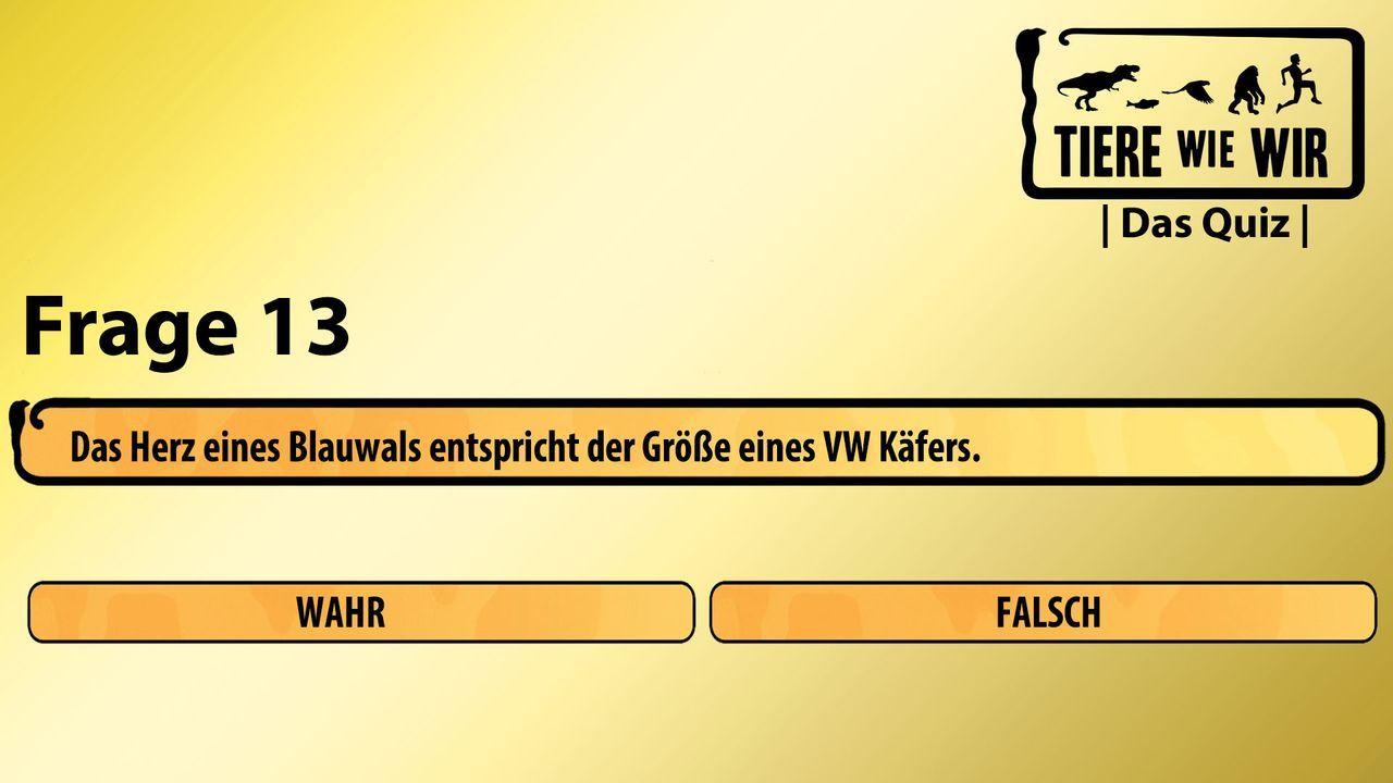 13_Frage_WF_Blauwal