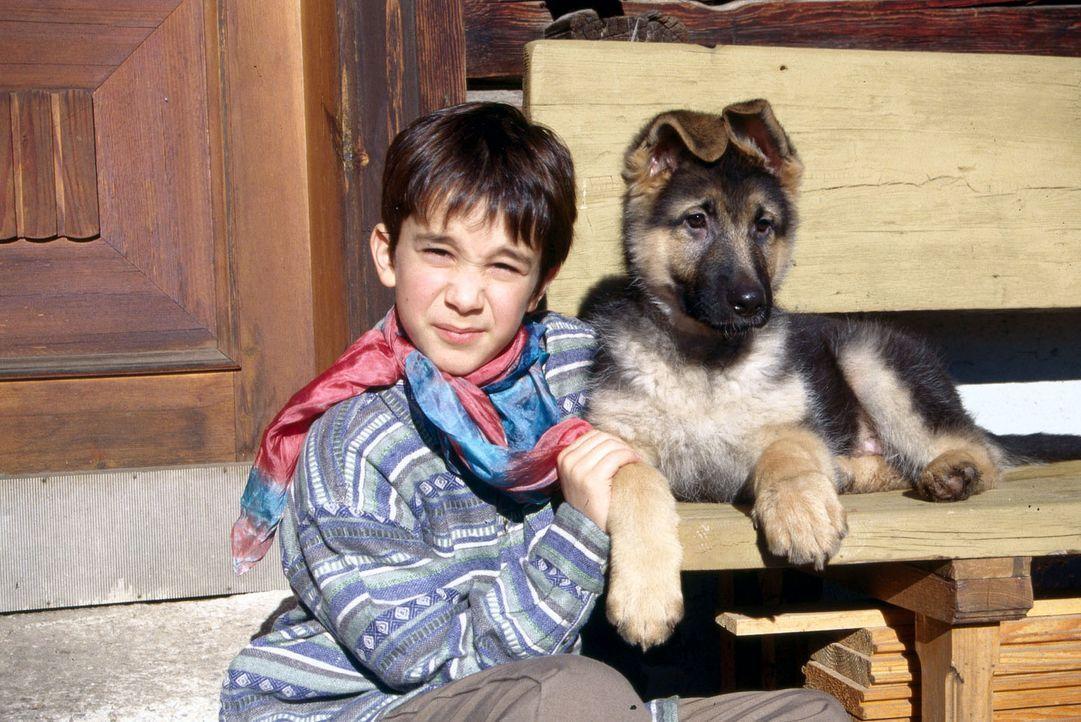 Benny Nachmann (Raphael Ghobadloo) ist heilfroh, dass die Züchterfamilie Antonius entschieden hat, den kleinen Rex bei ihm zu lassen. - Bildquelle: SAT.1