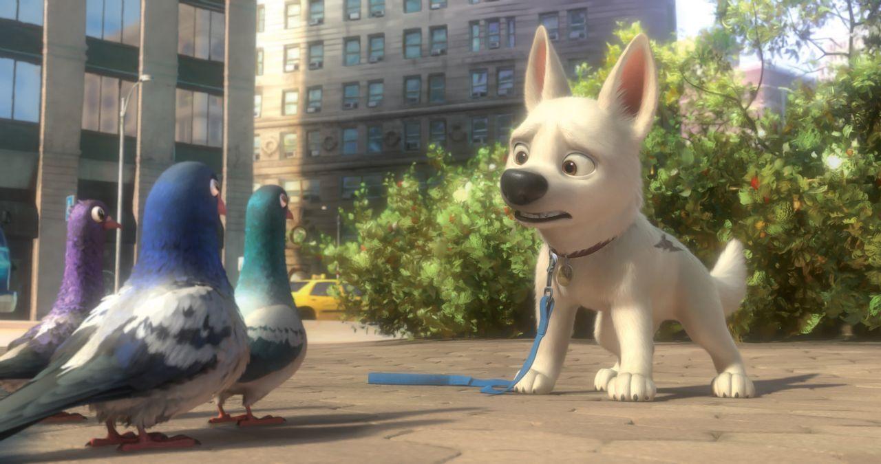 Können die drei Tauben Bolt (r.) erklären, warum er auf einmal keine Superkräfte mehr hat? - Bildquelle: Disney Enterprises, Inc.  All rights reserved