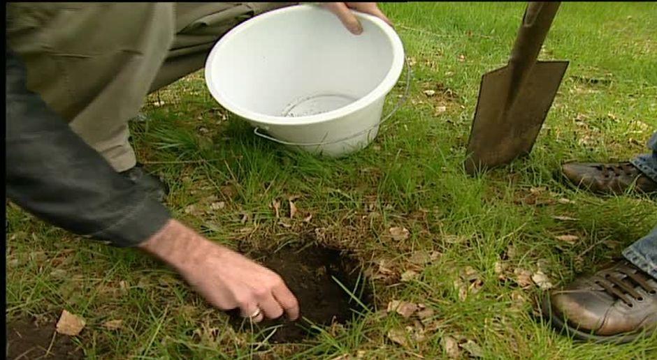 Bodenanalyse So Wird Der Rasen Wieder Grün Sat1 Ratgeber