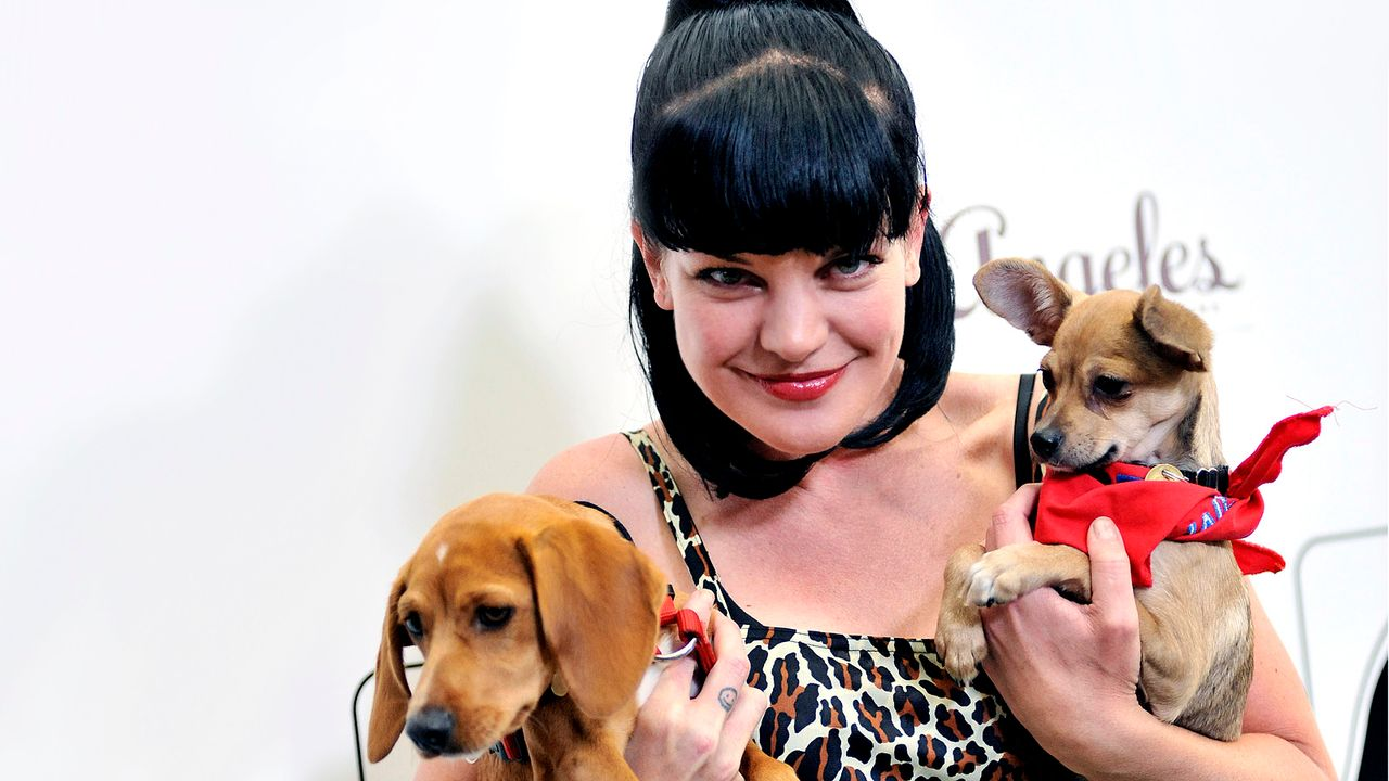 pauly-perrette-11-08-24-hunde-getty-AFP - Bildquelle: getty-AFP