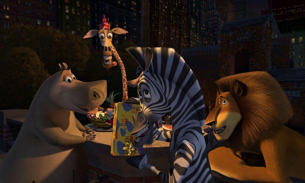 Der selbstverliebte Löwe Alex, das vorlaute Zebra Marty, die ständig panische Giraffe Melman und die divenhafte Nilpferd-Dame Gloria sind die abso... - Bildquelle: TM &   2004 DREAMWORKS ANIMATION SKG.