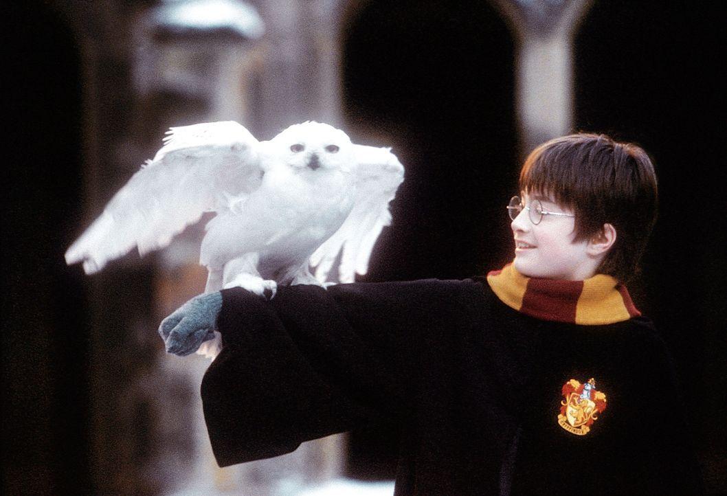An seinem elften Geburtstag erfährt Harry Potter (Daniel Radcliffe), dass seine Eltern Magier waren und vom bösen Lord Voldemort ermordet wurden, al... - Bildquelle: Warner Bros. Pictures