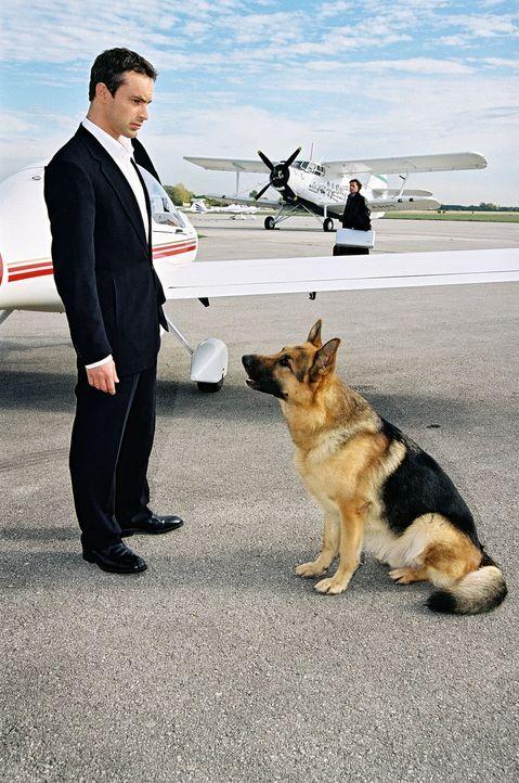 Kommissar Brandtner (Gedeon Burkhard) hat Rex in letzter Sekunde aus dem Flugzeug befreien können. - Bildquelle: Sat.1