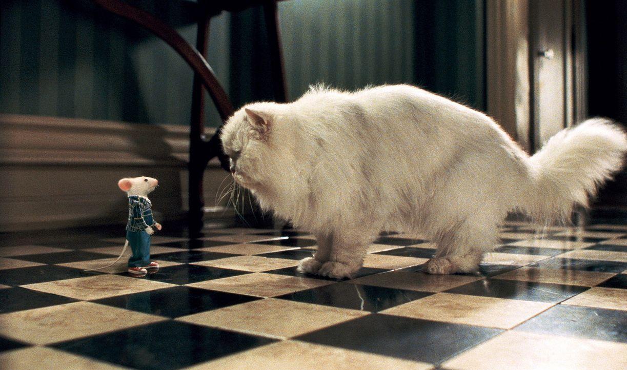 Als neues Mitglied der Familie muss sich Stuart (l.) erst durchsetzen, aber von einem mopsigen Stubentiger (r.) lässt er sich nicht einschüchtern... - Bildquelle: Columbia TriStar Film