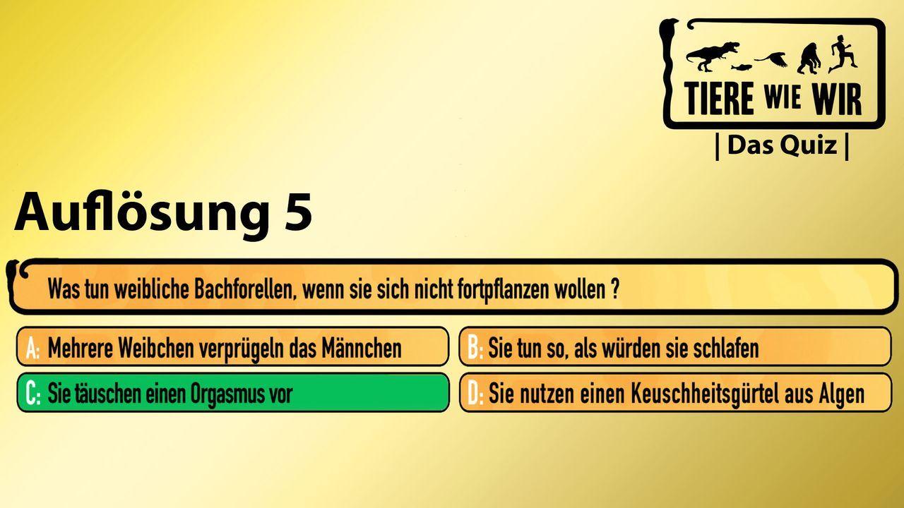 5_Auflösung_Bachforelle