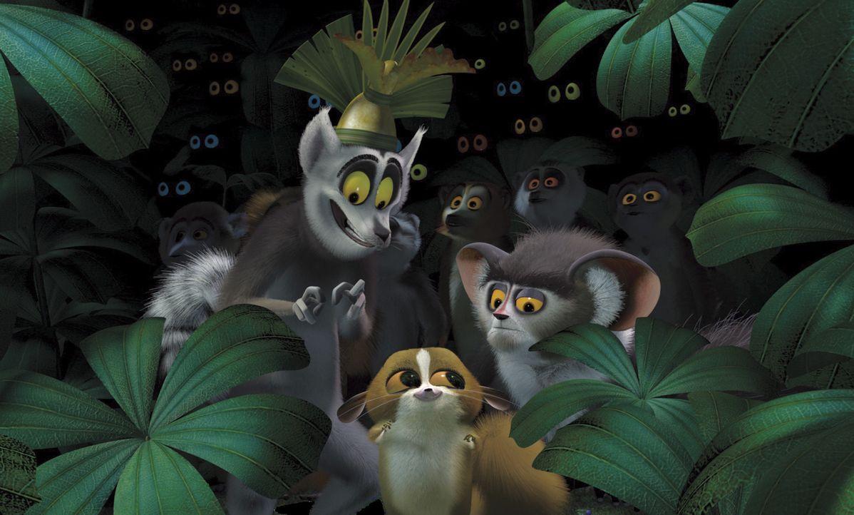 Die Zootiere Alex, Marty, Melman und Gloria haben so seltsame Tiere wie die auf Madagascar einheimischen Lemuren noch nie gesehen. Doch können sie... - Bildquelle: TM &   2004 DREAMWORKS ANIMATION SKG.