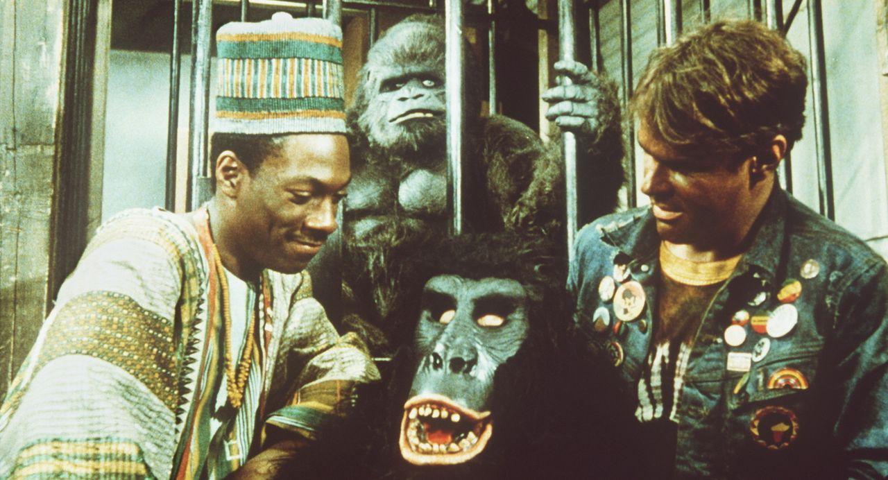 Als Billy Ray (Eddie Murphy, l.) und Louis (Dan Aykroyd, r.) herausbekommen, dass die beiden Gebrüder Duke hinter den radikalen Veränderungen in i... - Bildquelle: Paramount Pictures