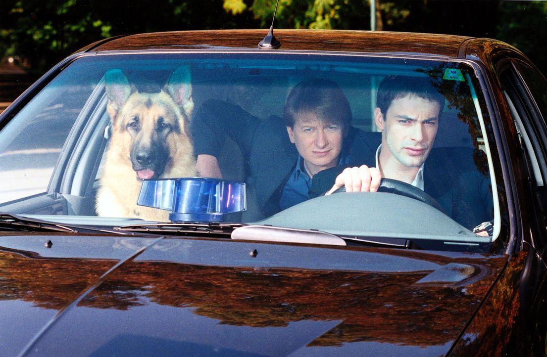 Rex, Böck (Heinz Weixelbraun, l.) und Kommissar Brandtner (Gedeon Burkhard, r.) observieren einen Verdächtigen. - Bildquelle: Ali Schafler Sat.1