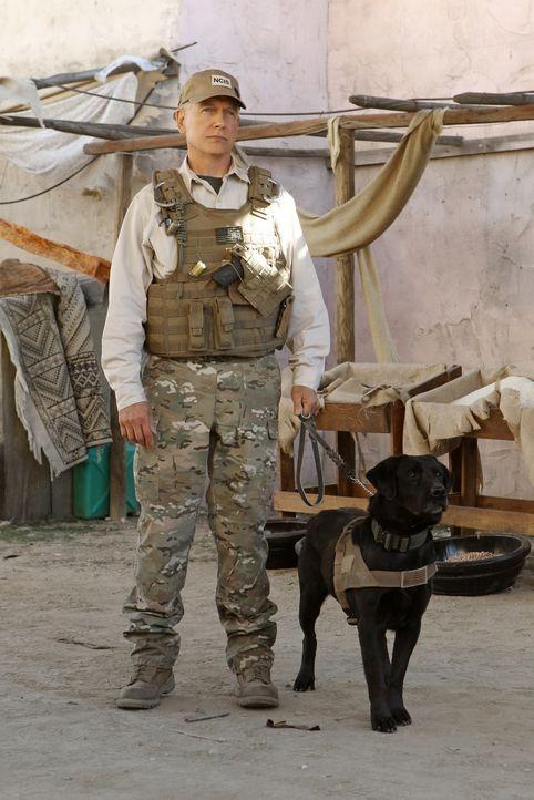 Fliegt nach Afghanistan, um dort einen Mord aufzuklären: Gibbs (Mark Harmon) ... - Bildquelle: CBS Television