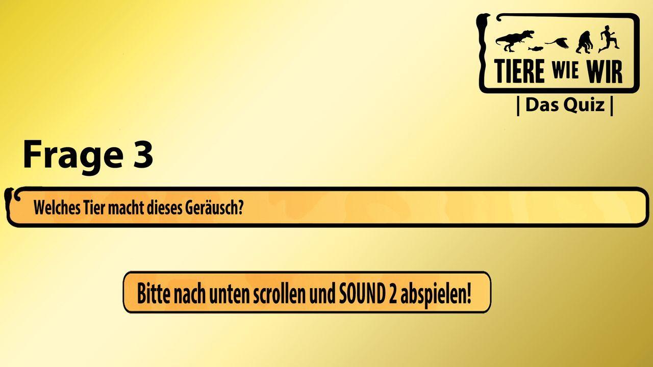 3_Frage_Sound