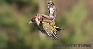 Wiesel_Miley