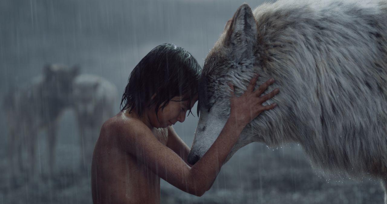 Als Mogli (Neel Sethi) und seinem Wolfsrudel große Gefahr droht, entscheidet er sich dazu, den Dschungel zu verlassen. Doch der Abschied fällt ihm ä... - Bildquelle: Disney Enterprises, Inc. All Rights Reserved.