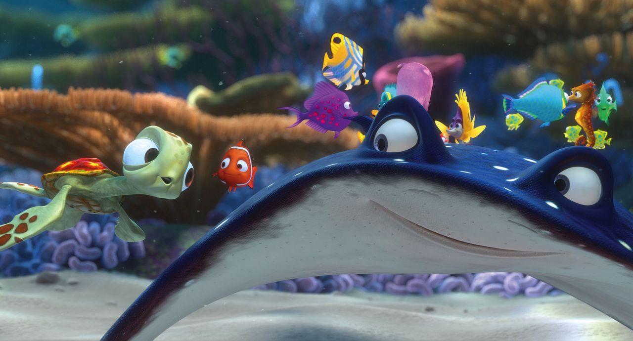 Mit ihrem Lehrer, einem Mantarochen, wollen die kleinen Meeresbewohner das Riff erkunden. Auch Nemo (2.v.l.) hat endlich die Erlaubnis von seinem än... - Bildquelle: Walt Disney Pictures