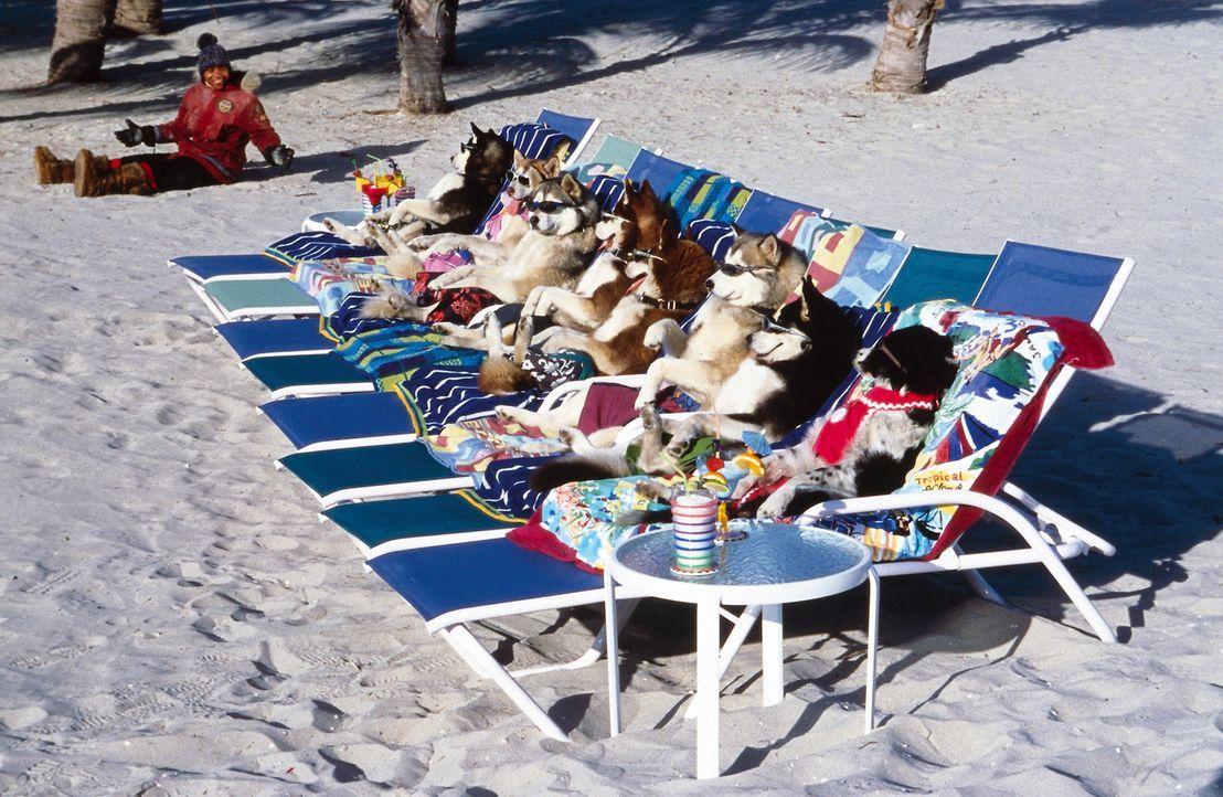 Schlittenhunde im Urlaub: Abkühlung am Meer - zumindest in Teds (Cuba Gooding jr.) Träumen ... - Bildquelle: Disney Enterprises, Inc.