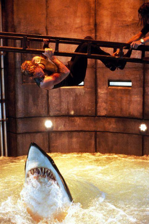 Als ein Sturm über die Forschungsinsel tobt, starten die drei Haie einen Angriff auf ihre Bewacher, denn durch die gentechnische Manipulation sind s... - Bildquelle: Warner Bros. Pictures