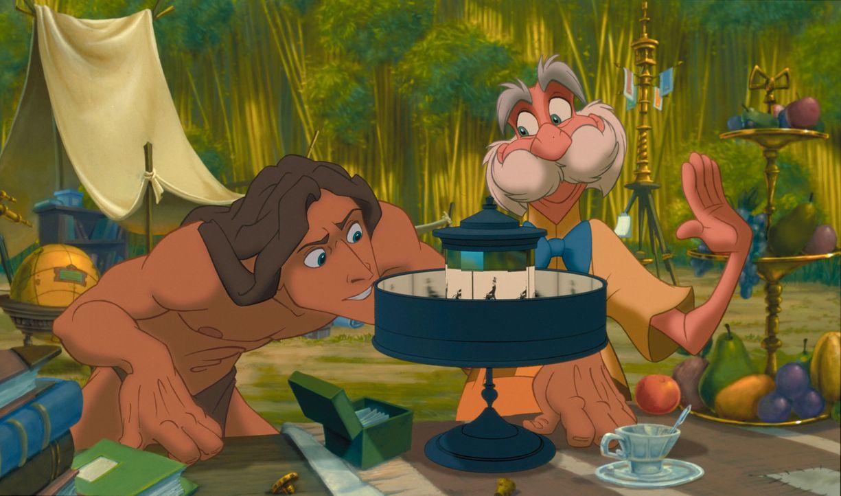 Seit seiner Geburt wächst das Menschenkind Tarzan, l. im Dschungel unter Affen auf. Als er auf Professor Archimedes Porter, r. und dessen Tochter tr... - Bildquelle: Edgar Rice Burroughs Inc. and Disney