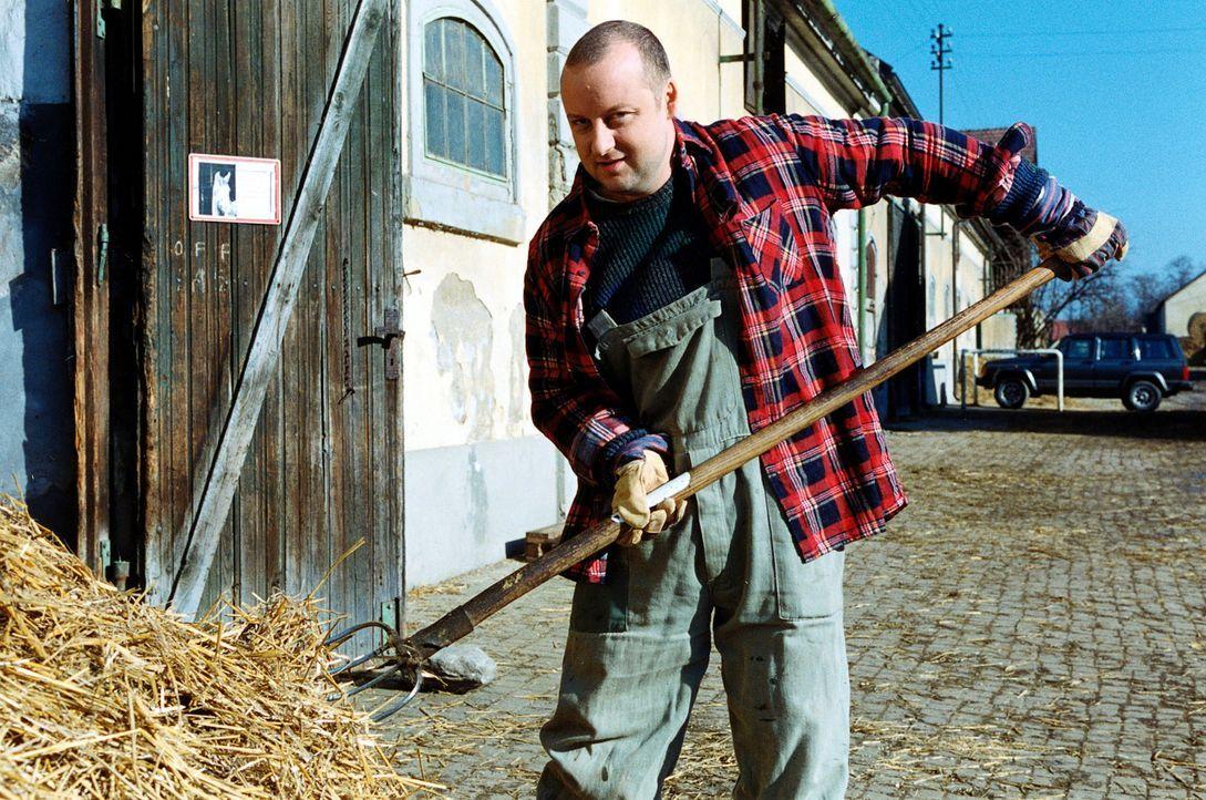 Fritz Kunz (Martin Weinek) betätigt sich undercover als Stallbursche auf dem Reiterhof von Hermine Latzki. - Bildquelle: Sat.1