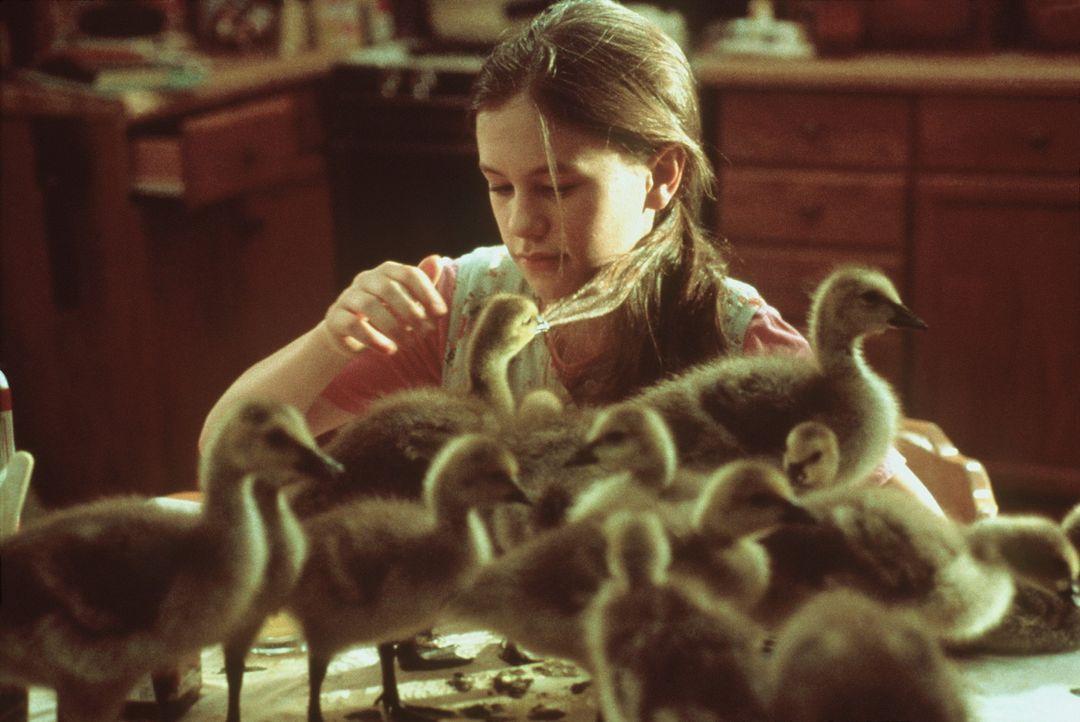 Amy (Anna Paquin) findet im Wald ein verlassenes Nest mit Gänseeiern. Sie baut einen Brutkasten und wird für die Küken zum Mutterersatz ... - Bildquelle: Columbia Pictures