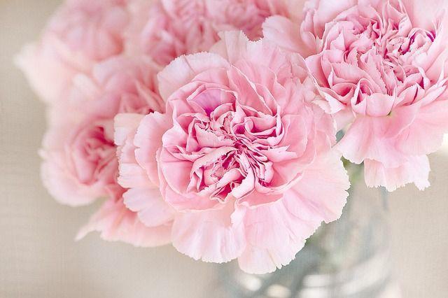 Frühling to goWann blühen endlich wieder die Blumen? Bestimmt könnt ihr es a...