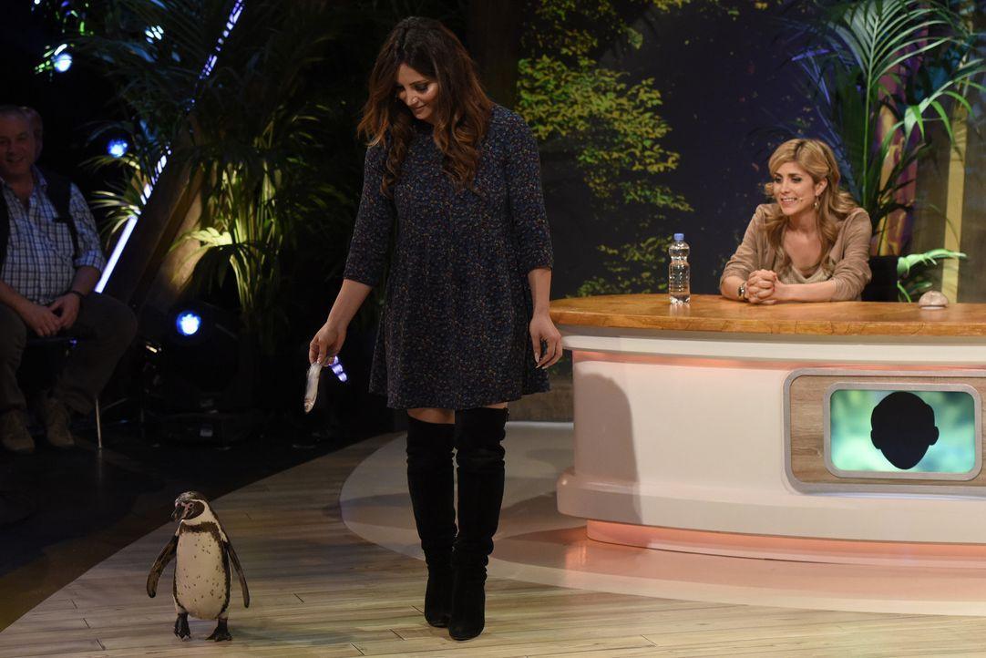 Während Enissa Amani (l.) ihr Bestes gibt, um den Pinguin für sich zu gewinnen, passt Panagiota Pedridou (r.) genau auf ... - Bildquelle: Martin Rottenkolber SAT.1