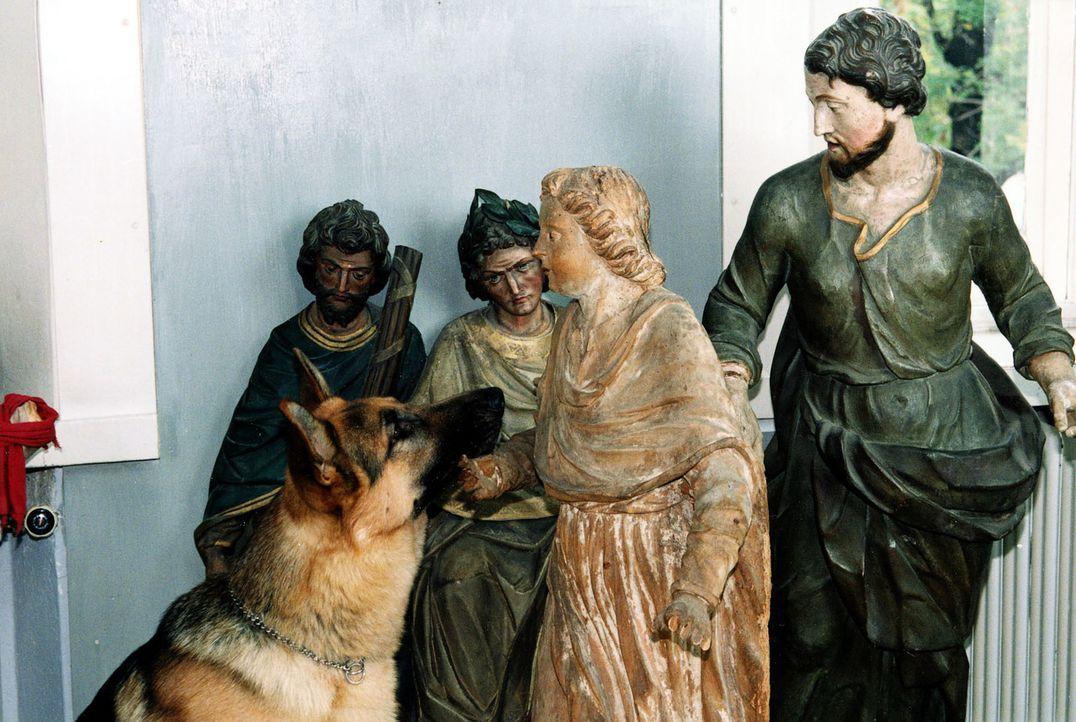 Auf der Suche nach dem Bild, unter dem sich das Testament des verstorbenen reichen Walter Stift befindet, entdeckt Rex diverses Schmuggelgut ... - Bildquelle: Ali Schafler Sat,1
