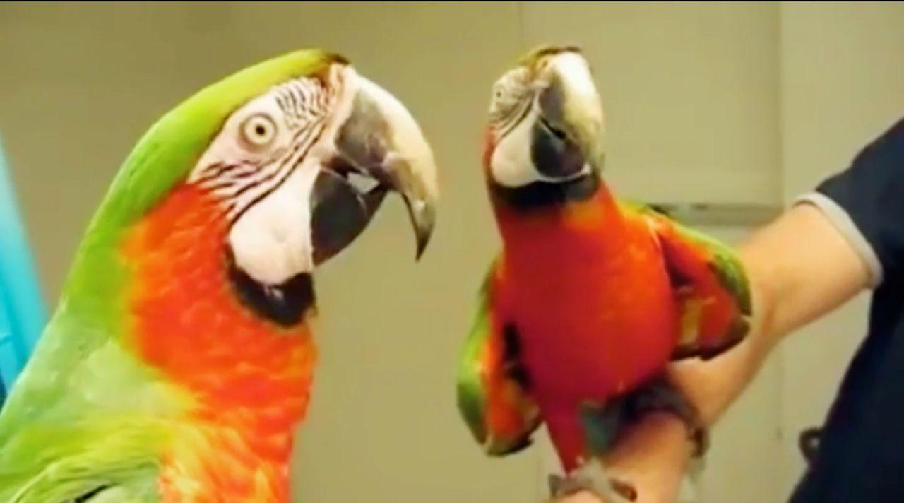 """Sie sind die wahren Stars auf YouTube: Tiere, die mit ihren lustigen Eskapaden die User erfreuen. """"Jetzt wird's tierisch!"""" präsentiert die witzigste... - Bildquelle: SAT.1"""