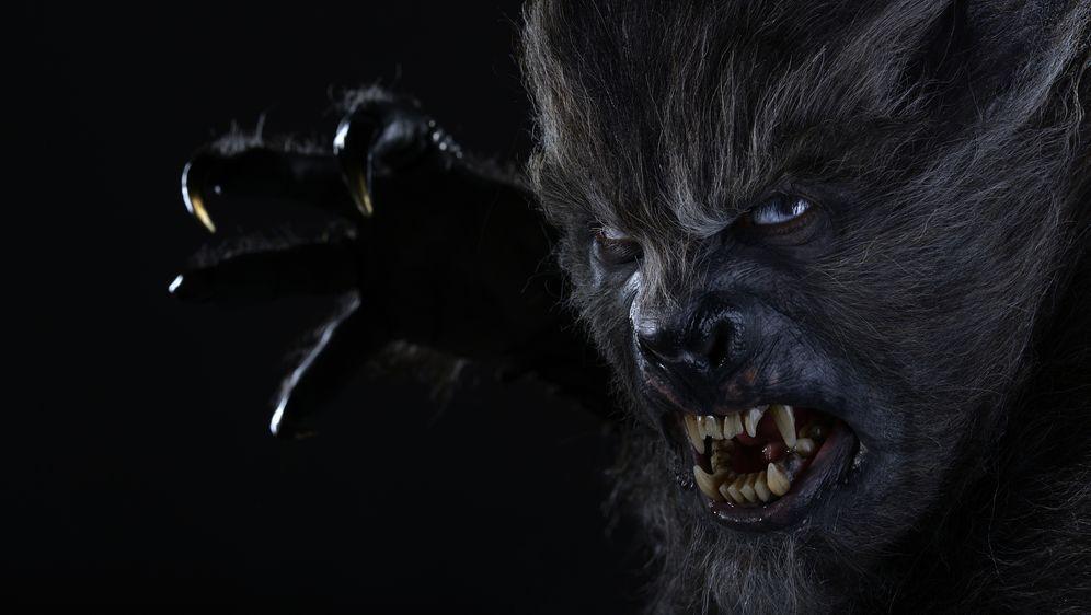 Wolves - Bildquelle: SQUAREONE ENTERTAINMENT GMBH