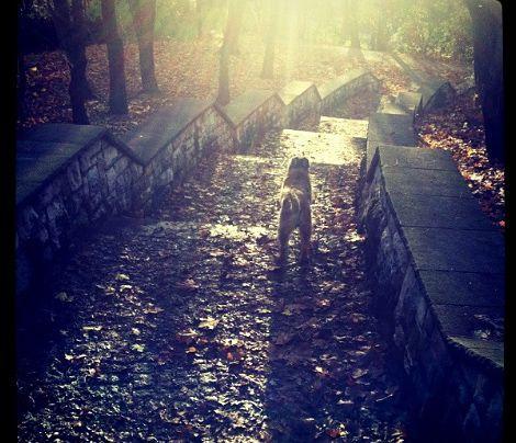 Morgens mit Peanut eine Runde durch den Park spazieren. - Bildquelle: Sarah Muehlhause