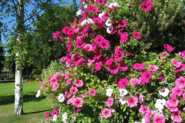 160513_Sommerpflanze_Bildergalerie_b6_Pixabay - Bildquelle: Pixabay