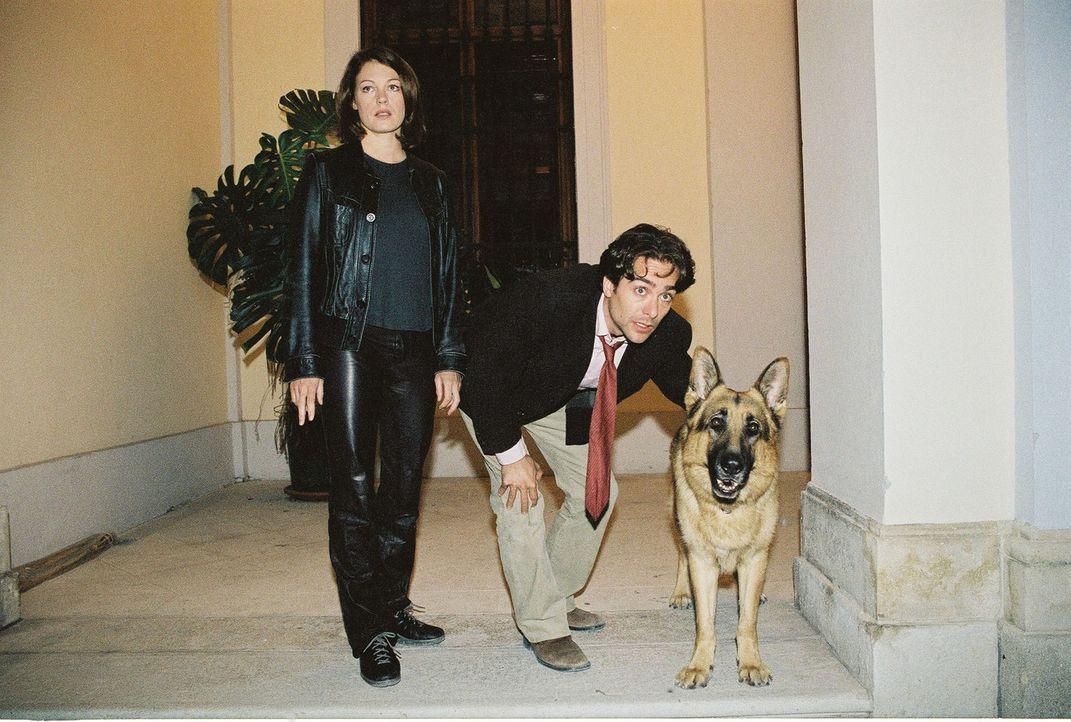 Niki (Elke Winkens, l.), Marc (Alexander Pschill, r.) und Rex verfolgen einen Tatverdächtigen ... - Bildquelle: Sat.1