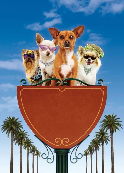 Ein Abenteuer für Chloe (2.v.l.), Papi (2.v.r.) und ihre Freunde beginnt ... - Bildquelle: Disney Enterprises, Inc.  All rights reserved