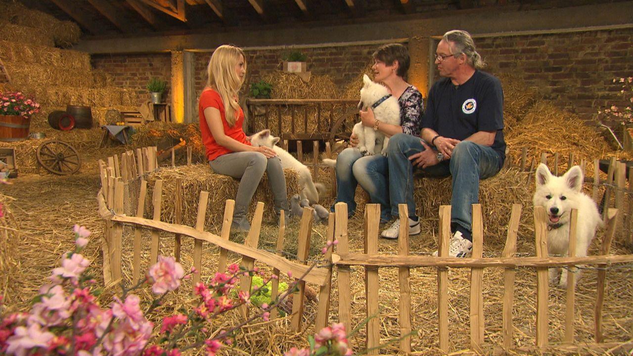 Familie Graffunder züchtet im niedersächsischen Verden weiße Schäferhunde. Andrea Kaiser stattet ihnen einen Besuch ab ... - Bildquelle: SAT.1