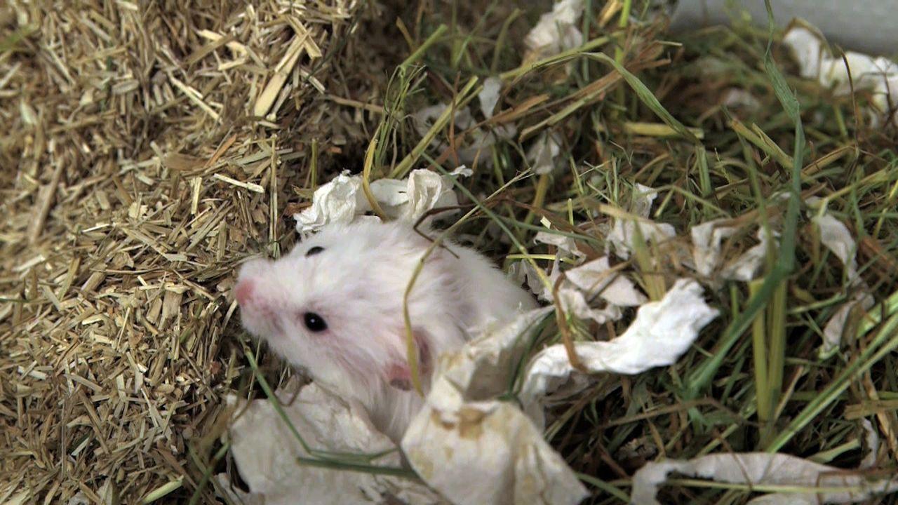 pbb-Hamster_06