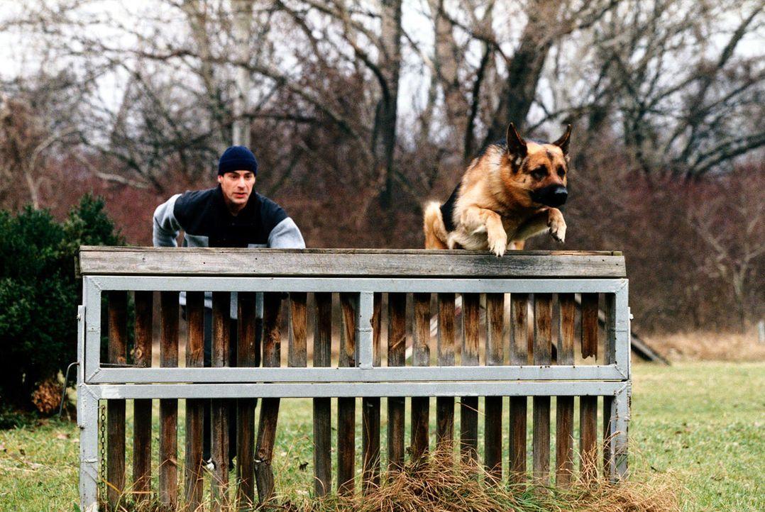 Kommissar Brandtner (Gedeon Burkhard) und Rex trainieren auf dem Polizeigelände. - Bildquelle: Ali Schafler Sat.1