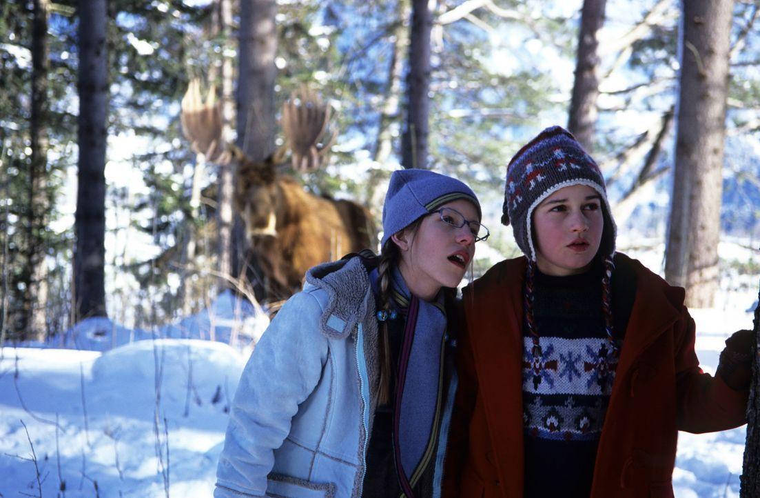 Während sein Vater auf Forschungsreise am Nordpol ist, leben Bertil (Raban Bieling, r.), seine Mutter und seine Schwester Kiki (Sarah Beck, M.) all... - Bildquelle: Buena Vista International Television
