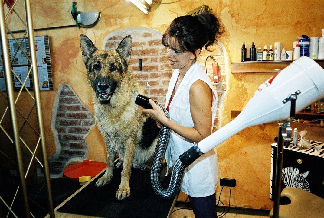 Die Hundefriseurin (Suyin Orlowski) gibt Rex den letzten Schliff. - Bildquelle: Sat.1