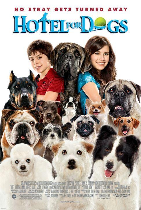 Das Hundehotel - Plakatmotiv - Bildquelle: MMVIII MavroCine Pictures GmbH & Co. KG All Rights Reserved.