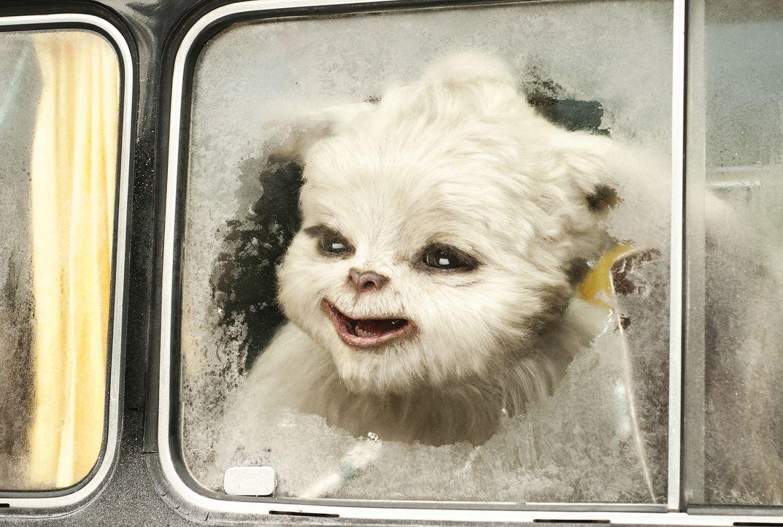 Will zurück in seine Heimat, den Himalaya: Yeti Yoko ... - Bildquelle: Sony Pictures