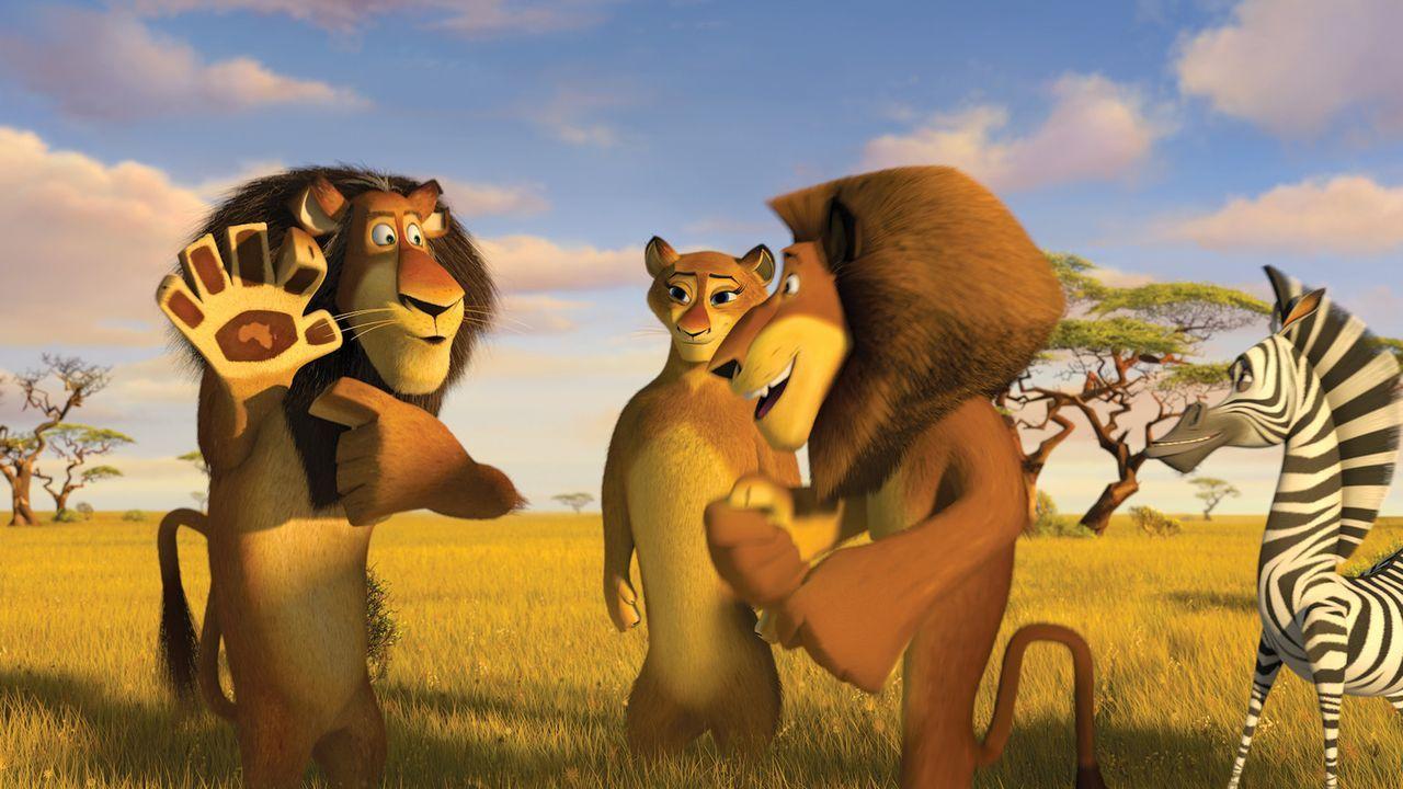 Das ist ja kaum zu glauben! In Afrika trifft Löwe Alex seine Eltern. Auch für seine drei Freunde hält der neue Kontinent noch Überraschungen ber... - Bildquelle: (2008) DREAMWORKS ANIMATION LLC. ALL RIGHTS RESERVED.